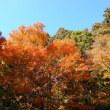 筑波山 2013年紅葉  2013.11.22
