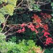 緑の中のアニーではなくて、緑の中のハゼの木の紅葉でした。 (Photo No.14115)