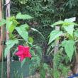 レンガ花壇の花