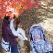 秋    彩り   と  柚子ジャム