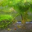 竹島水族館とオオグソクムシと私
