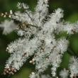 サクラタデはじめ可愛い秋花たち・野川公園