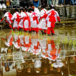 今治市の大山祇神社の御田植祭