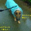 雨・・・レインコート着て散歩へ