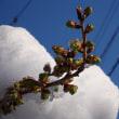 大雪の次の日
