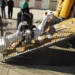 「移動動物園」のイベント…今年も開催!・・・高槻市十中校区地域教育協議会主催です。