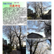 花巡り 「桜-その493」 羽黒神社 古河