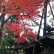 只今(29.11.11)の紅葉🍁