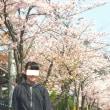 桜満開~♪  限定品 「桜カステラ」入荷中!