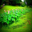 蓮の花とお盆休みに思い出は増える