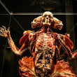 支那の臓器問題が世界中に拡散!英国、スイス、米国で・大紀元がウイグル収容施設でのレイプを暴露