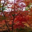 北野天満宮・もみじ苑の紅葉