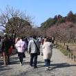 ぶらり旅・2018水戸の梅まつり⑦梅の花はまだまだですよetc
