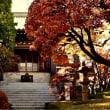 紅葉寺の紅葉