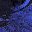 晩秋の芦生の森
