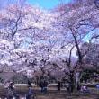 桜に必要?