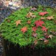 季節の和菓子と紅葉狩り♪
