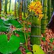 『晩秋の色』 石蕗