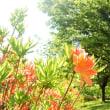 5月の翠、オレンジの躑躅。