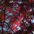 紅葉を見に...②