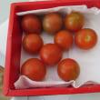 トマトももう終わり