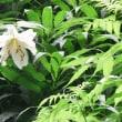 秩父宮記念公園の花