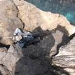 磯釣遊会 5月度例会 真鯛 in 浜坂