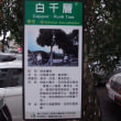 台北2017:白千層