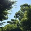 今朝の白川公園