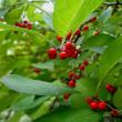 『 我が家の秋の風物植物・・・ 』