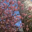 逃避ラン・北海道立衛生研究所薬用植物園「春の山菜展2018」往復ジョグ
