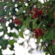 木イチゴのジャム