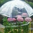 花に傘・・