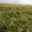 水稲損害評価講習会