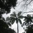 奄美大島1月24日