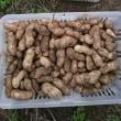 落花生と枝豆の収穫