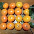 種あり 柿