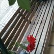 花を見つめ6543歩