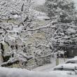 雪・・・その後