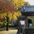 大野寺 磨崖仏付近の紅葉