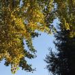 秋ですね・豊後国分寺跡