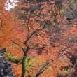 102 JR大津駅から音羽山を経て紅葉の石山寺 2017.11.19