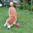ボール見つけた_170728