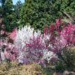 小仏城山から高尾の桜を求めて