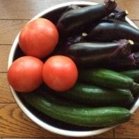 朝採りの野菜