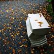 秋を見つけに・・・