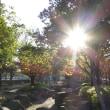 晩秋の公園・・・