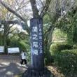 日記0376:青島太平洋マラソンの珍道中