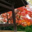 12月1日 山﨑聖天の紅葉