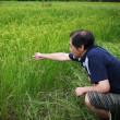 日照不足の東日本。今年のお米は大丈夫? 8/23 宮城県
